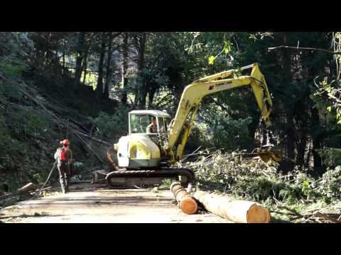 Si taglia il bosco per liberare la strada