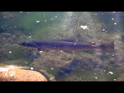 trout river fishing trout fishing lakes trout pond fishing