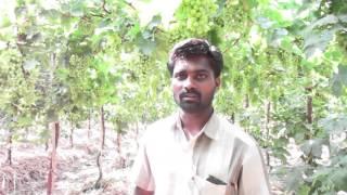 Solapur Sagar bhosale