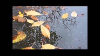 Video Monday Morning Rain