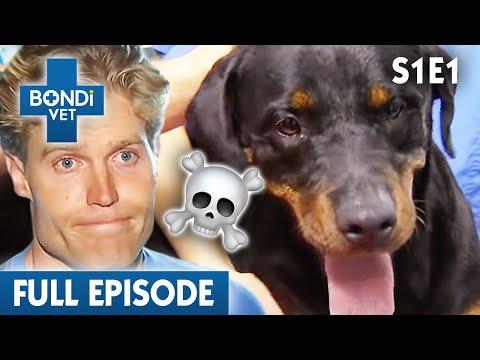 🐶 Dog Can't Run Properly | FULL EPISODE | S01E01 | Bondi Vet