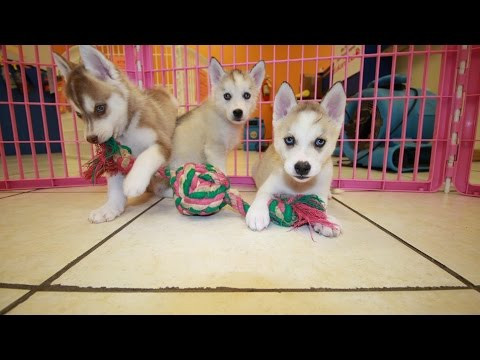 Cumberland County K Dogs For Sale