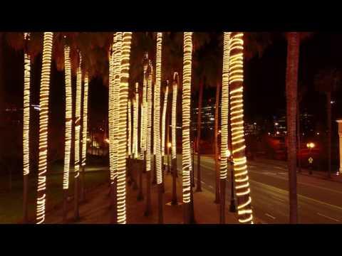 SAP Lighted Palm Trees