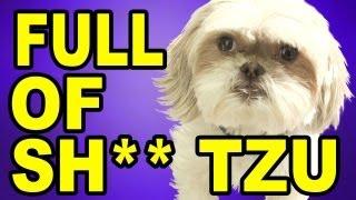 FULL OF SH** tzu