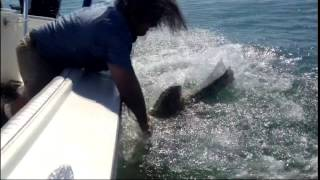 Very Funny, Extremely Dangerous, When Fish Attack Back Compilation. The best attacks on Chew On This Saltwater Fishing Show. .Watch my good friend Captain Bo Johnson of the DBo Show save a Tarpons life by physically grabbing the Huge Hammerhead Shark by it's dorsal fin and pulling t.Funny Fish Attack. Very Funny, Extremely Dangerous, When Fish Attack Back Compilation. The best attacks on Chew On This Saltwater Fishing Show. . READ THIS F.FISH BEING FISH WITH OTHER FISH.