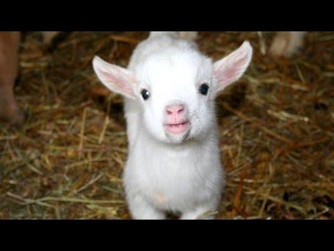 i versi dei cuccioli di animali: la tenerezza!
