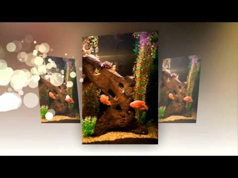 video:Freshwater Aquarium Designed by Aquatech Aquarium Services Los Angeles