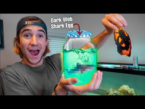HATCHING My DARK WEB SHARK EGG!!