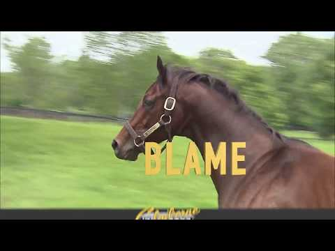 Blame Commercial 2017