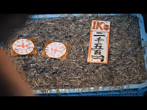 イカナゴのシンコ漁解禁 播磨灘や大阪湾