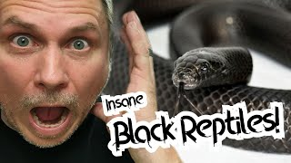 WORLD'S BLACKEST SNAKE AND INSANE BLACK REPTILES! | BRIAN BARCZYK by Brian Barczyk