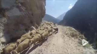 faze tari drum periculos