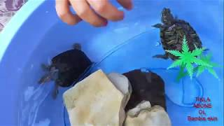 Turtle  Tortoise   A Funny Turtle And Cute Turtle Videos Compilation.