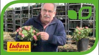 Erdbeeren Doppelfreude - Neu ab diesem Sommer!