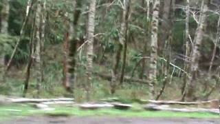 5. Driving along the Nestucca River