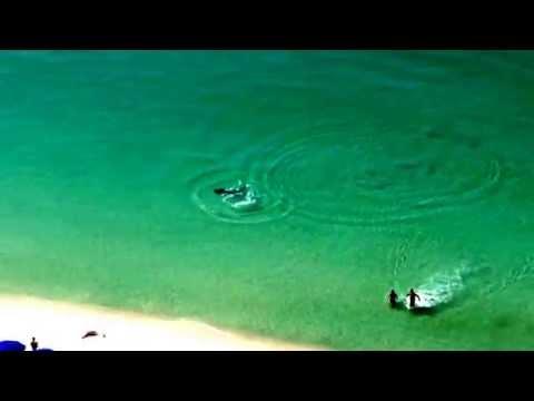 Dos bañistas escapan a tiempo de un tiburón martillo