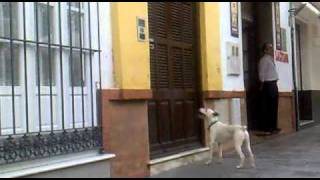 Sanlucar de Barrameda Spain  city photos : Olympic High Jumping Dog Sanlucar de Barrameda, Spain - Jumping Dog - Bouncing Dog