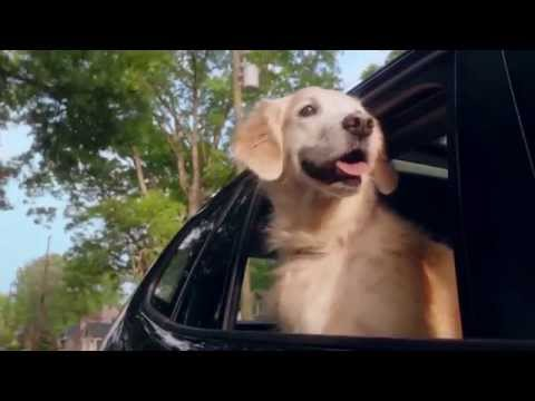 Ready for Anything Commercial - Veterinary Pet Insurance