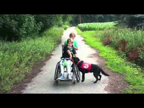 Behindertenbegleithund Lisi & Julius