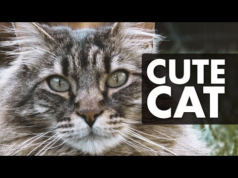 CATS MEOWING - Distract Your Cat!