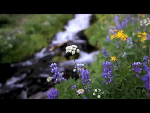 A Nature Moment along the Green Lakes Trail, Oregon