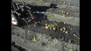 КМЗ-012 копка картошки.