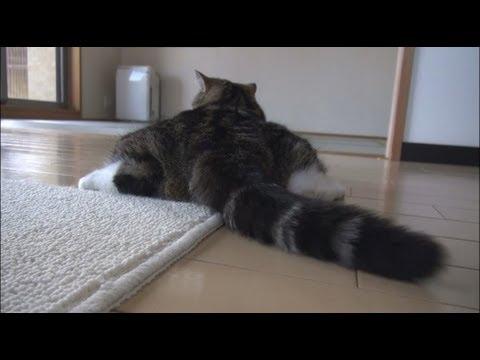 El Gato Maru en su muchas facetas