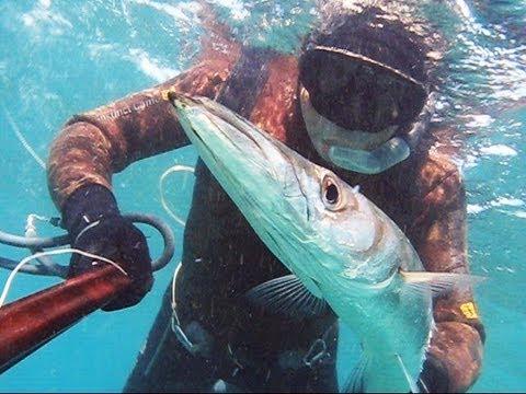 Pescasub e oggi un bel barracuda