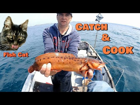 Catch amp Cook 3 Bearded Rockling Featuring Fish Cat