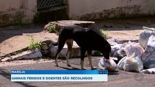 Prefeitura de Marília contrata empresa para resgatar animais das ruas