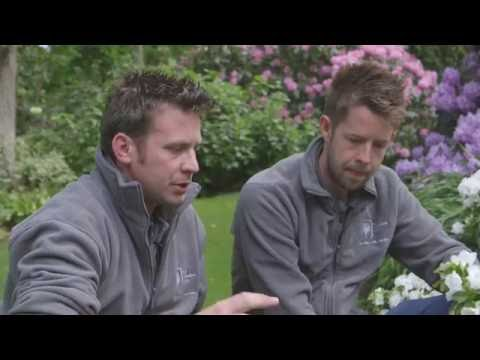 Rhododendrons | A Masterclass