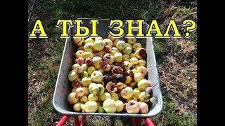 Куда девать опад от яблок