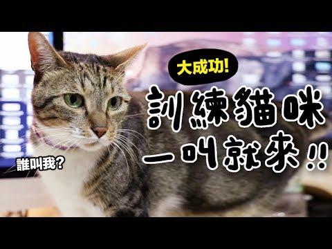 【黃阿瑪的後宮生活】訓練貓咪一叫就來!大成功!