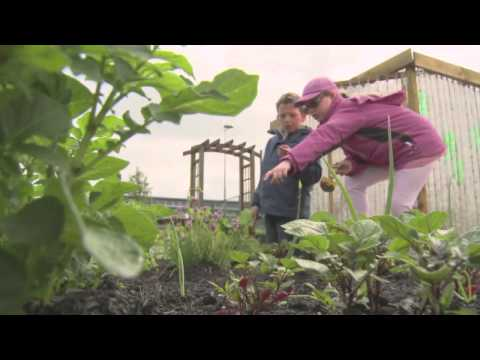 Clarkston Primary School eco project community grant