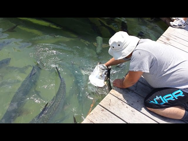 islamorada latino personals Pelican cove resort marina hotel islamorada: find 244 family reviews, candid photos and detailed information for the pelican cove resort marina hotel islamorada read useful tips from other families.