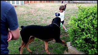 Video HUGE DOG SCARES THE PANTS OFF LITTLE BOY! MP3, 3GP, MP4, WEBM, AVI, FLV Juli 2018