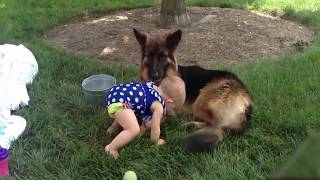 Dog Protecting Baby Dog is not only a pet but also a good friend Compilation NEW.Thank for watching.Please share o.r leave a comment if you found something funny. ✔Please Follow us on Instagram for more funny : https://goo.gl/OkrBvd