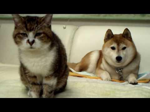 「[イヌ&ネコ]動物版「Living Photograph」と呼べるような微動だにしない2匹のペット。」のイメージ
