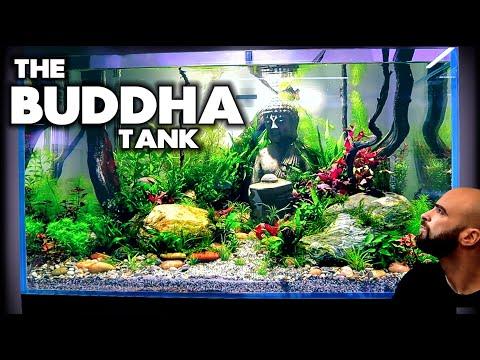 Building The BUDDHA Tank (part 2) Planting | MD Fish Tanks