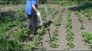 Борьба с сорняками. Быстрая прополка междурядья картофеля