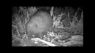 Wildlife Trail Camera - 24.4.2016