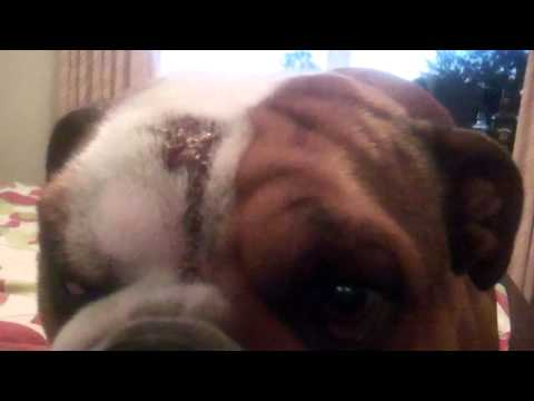 Elwood 14 months old – hot spots (vid2)