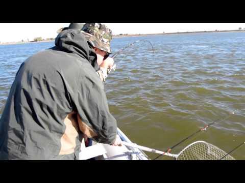 ахтуба рыбалка дедушкин хутор