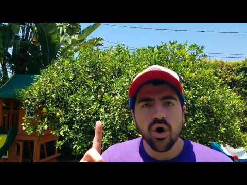 Liberal Redneck - Transgender Patriots and the GOP