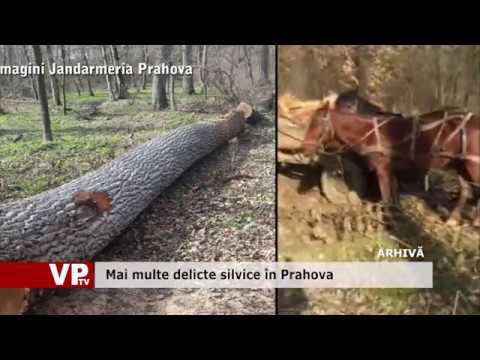 Mai multe delicte silvice în Prahova