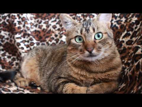 Stop Cat Peeing On Couch Rug Or Carpet Right Now Review Club