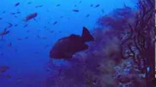 Golfo Aranci Italy  city photos : Secca del Papa - Golfo Aranci - Sardegna ITALY
