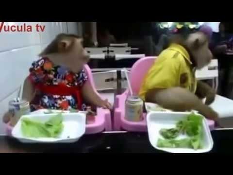 Hai chú khỉ bá đạo nhất vịnh Thái Lan