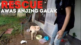 Video RESCUE: Begini Menjinakkan Anjing Galak MP3, 3GP, MP4, WEBM, AVI, FLV Februari 2019