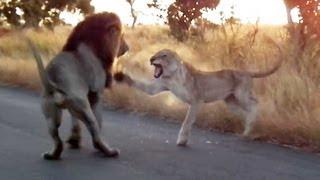 Giờ đã hiểu Sư tử Hà Đông là gì :))